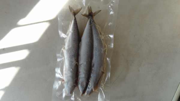 Mackerel Frozen Pike Dead Bait Medium